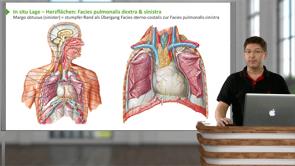 Thoraxwand, Mediastinum und Diaphragma