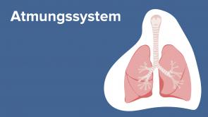 Atmungssystem