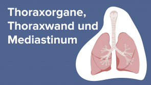 Thoraxorgane, Thoraxwand und Mediastinum