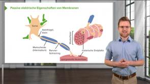 Das Nervensystem und seine Funktionsprinzipien