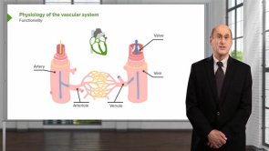 Introduction to the Vascular System