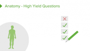 Anatomy - High Yield Questions