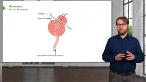Zytologie / Molekulare Zellbiologie