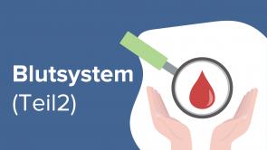 Blutsystem (Teil 2)