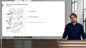 Vegetatives Nervensystem (VNS)