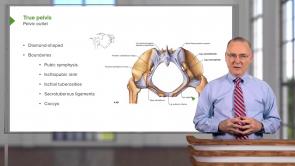 Gastrointestinal Gross Anatomy