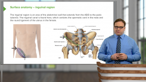 Musculoskeletal, Skin, and Connective Tissue—Anatomy