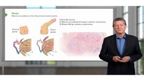 Renal Histology
