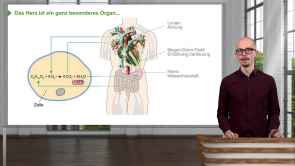 Elektrophysiologie des Herzens