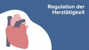 Regulation der Herztätigkeit