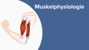 Muskelphysiologie