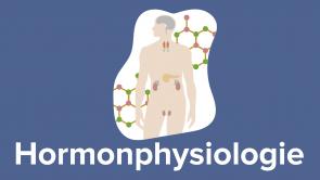 Hormonphysiologie