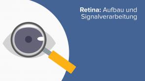 Retina: Aufbau und Signalverarbeitung