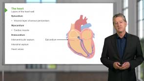 Cardiovascular Histology