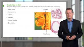 Respiratory Histology