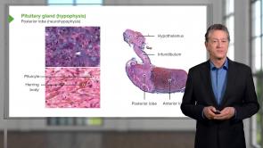 Endocrine Histology
