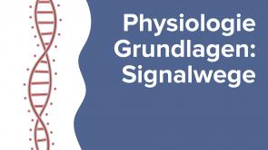 Physiologie Grundlagen: Signalwege