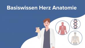 Basiswissen Herz Anatomie