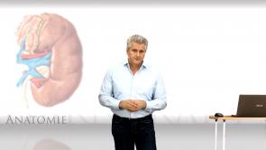 Basiswissen Harntrakt Anatomie