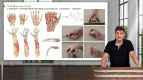 Obere Extremität – Handmuskeln