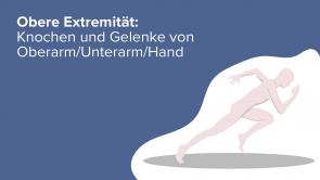 Obere Extremität: Knochen und Gelenke von Oberarm/Unterarm/Hand