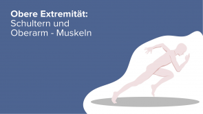 Obere Extremität: Schultern und Oberarm - Muskeln