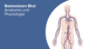 Basiswissen Blut Anatomie und Physiologie