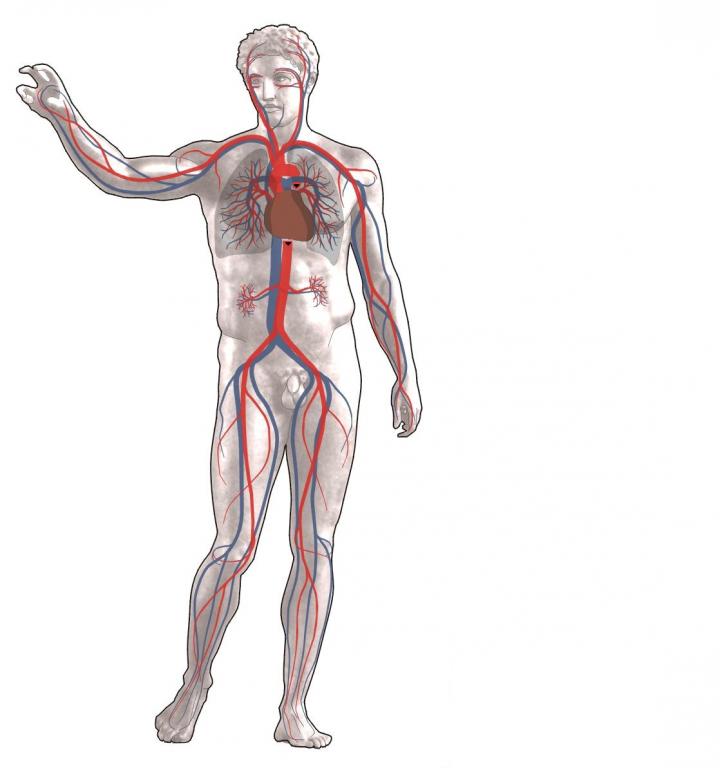 Vorschlag_Änderung_Blutkreislauf.jpg