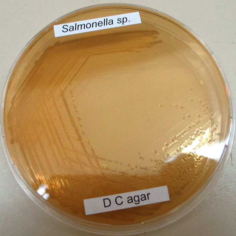 Salmonella_sp._on_DC-agar_from_Flickr_69017875.jpg