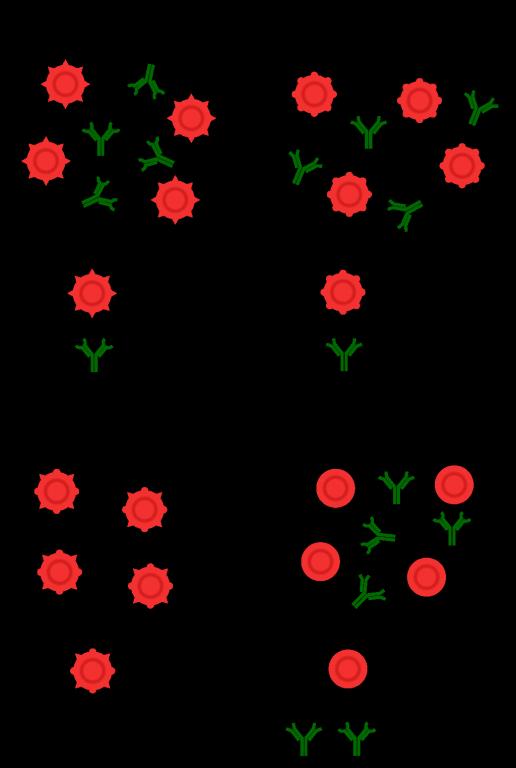 Blutgruppen1_1024px-Blutgruppen_AB0-System.svg.png