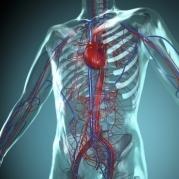 Anatomie online lernen