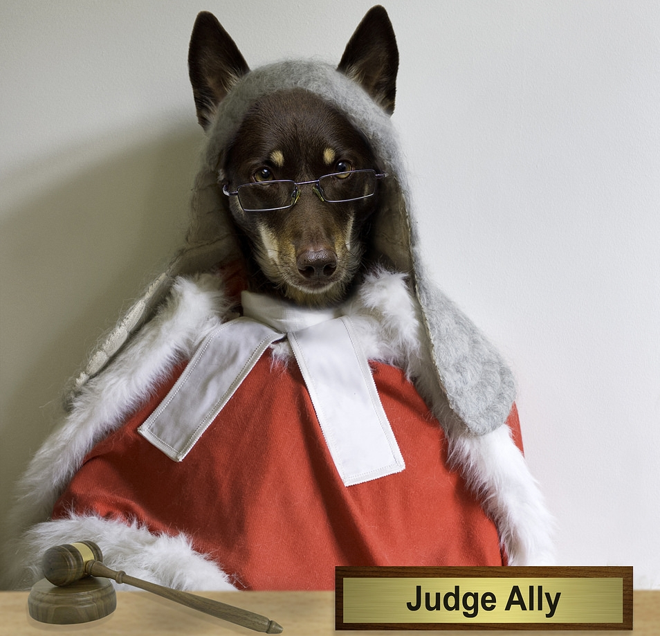 Richter Hund - Staatsexamensvorbereitung