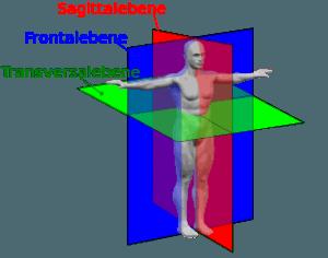 Körperebenen des Menschen