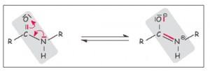 peptidbindung mesomerie