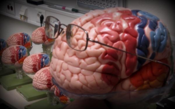 Schlaues Gehirn - Gedächtnisleistung