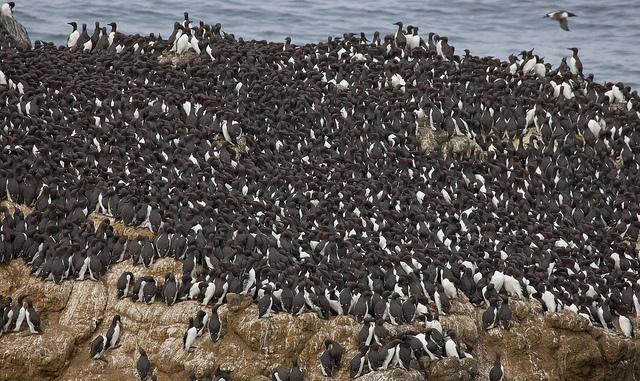das-ist-eine-vögelkolonie