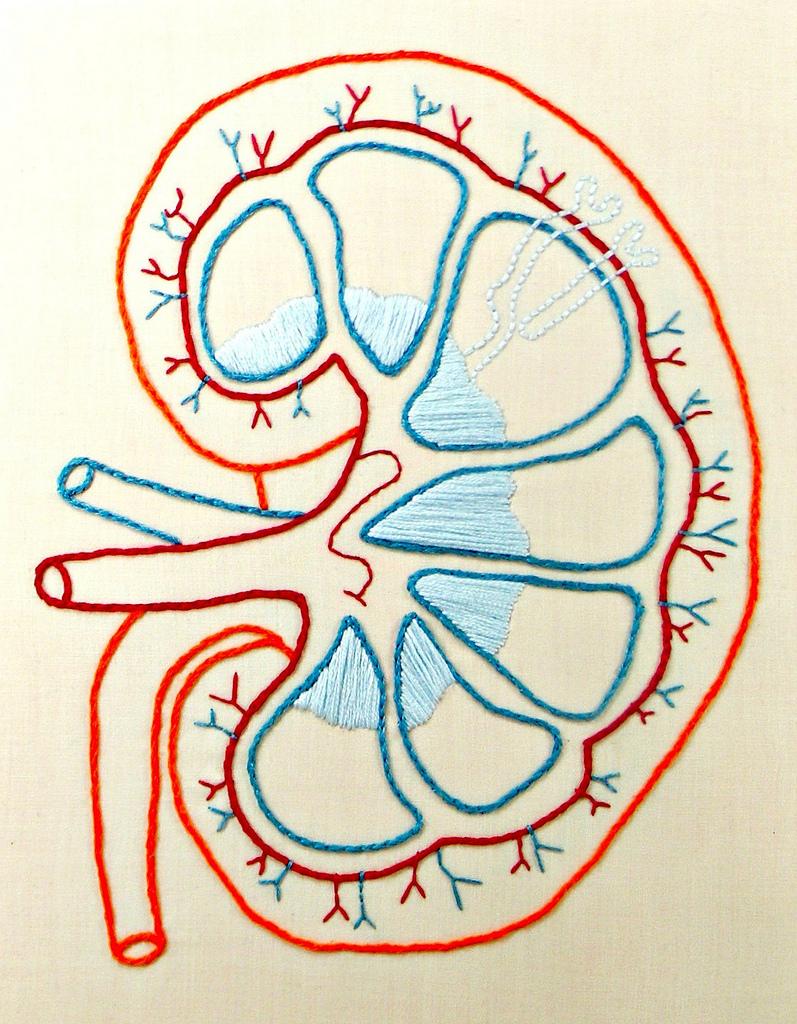 Die Physiologie der Nieren