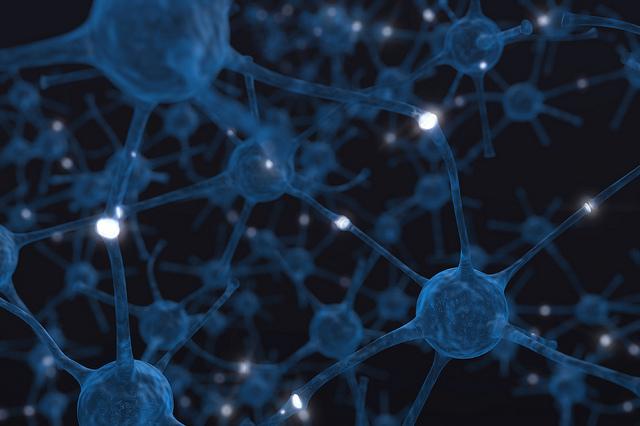 das-bild-zeigt-neuronen