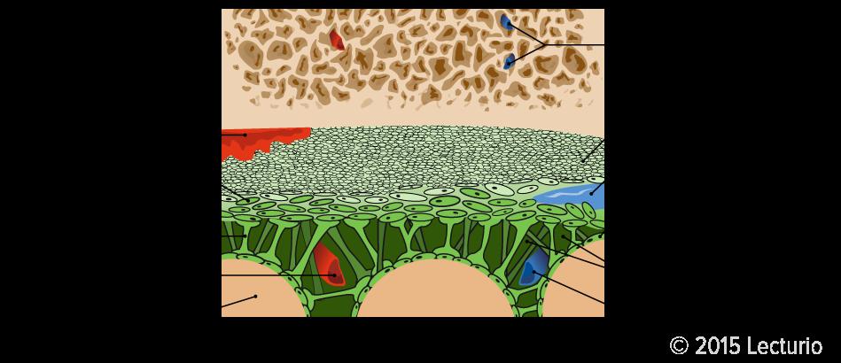 Epiduralblutung, Subduralblutung & Subarachnoidalblutung
