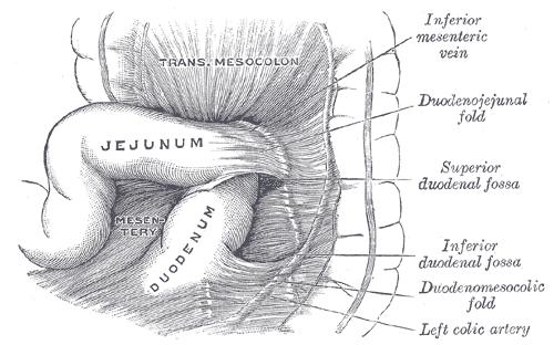 Aufbau des Jejunums