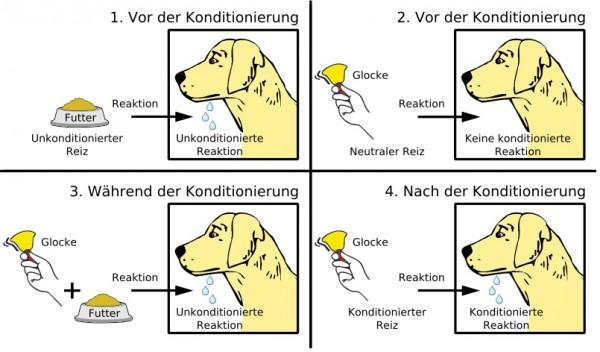 Schema der klassischen Konditionierung am Beispiel des Pawlowschen Hundes