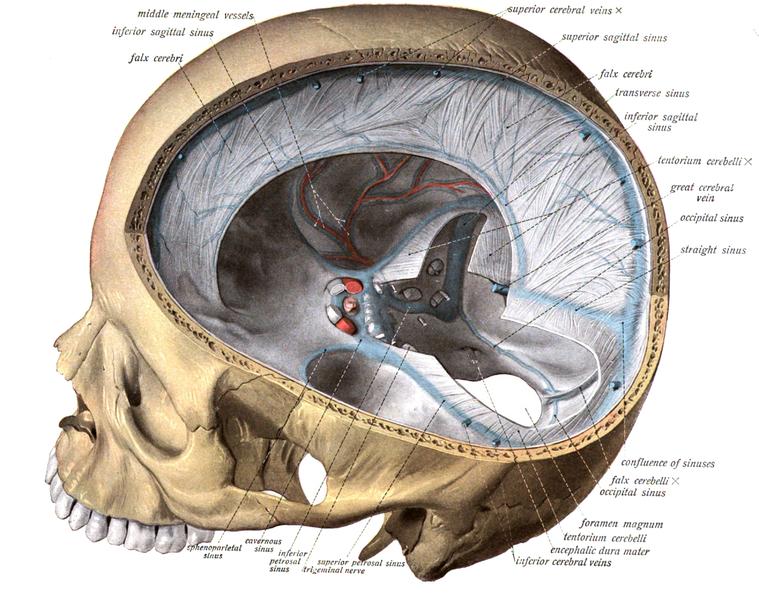 Hirnhäute (Meningen): Aufbau der einzelnen Hirnhaut Schichten