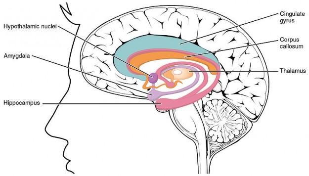 Lernen und Gedächtnis – Neurophysiologische Grundlagen