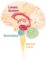 Limbisches System