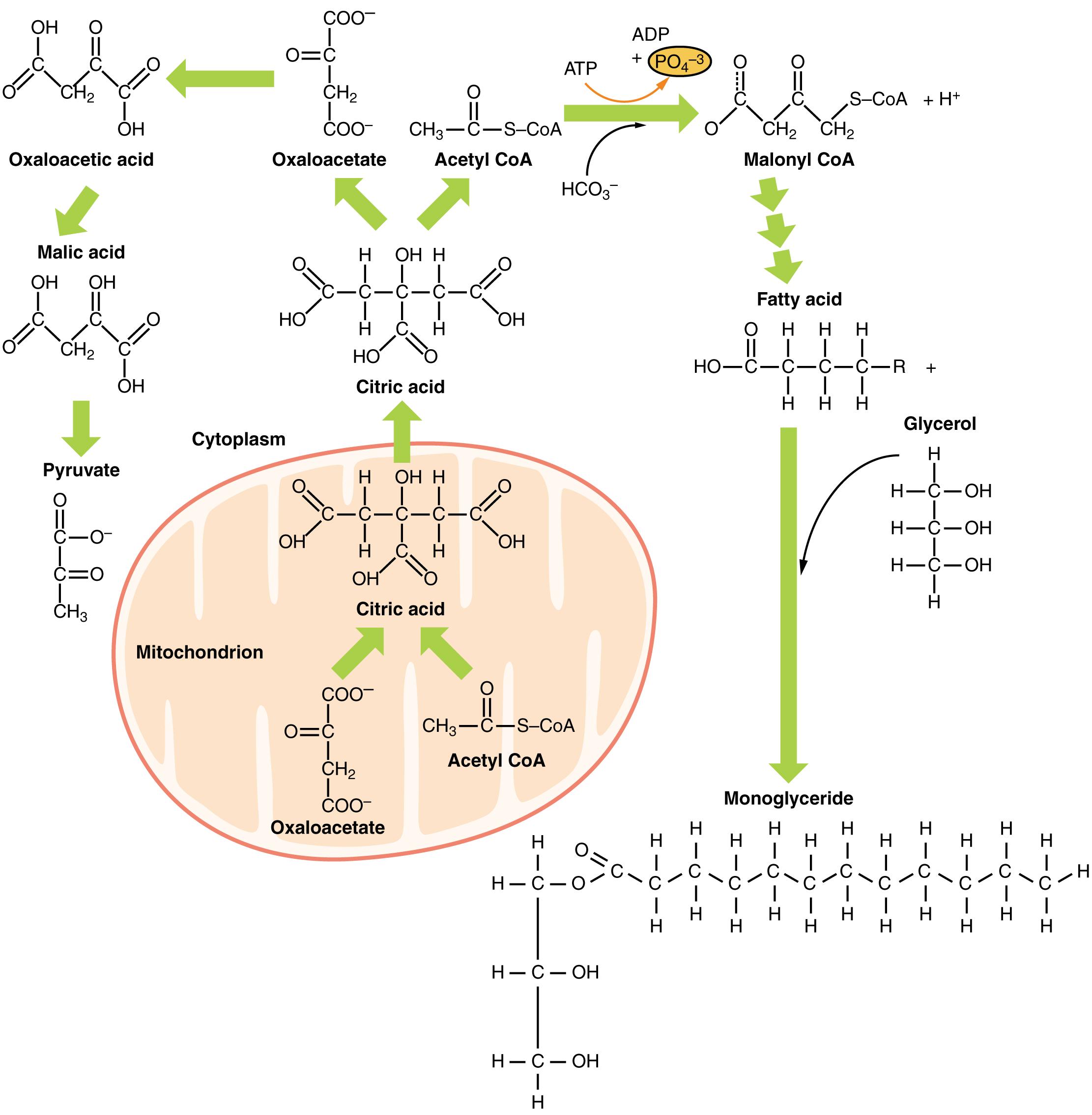 Schön Chemische Formeln Und Nomenklatur Arbeitsblatt Antworten ...