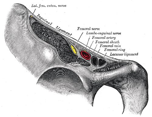 beschriftete Zeichnung des Nervus femoralis