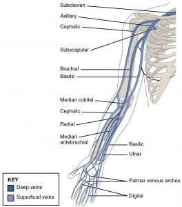Abbildung der Venen der oberen Extremitäten