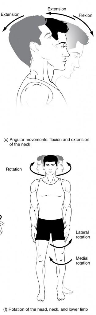 diese abbildung zeigt bewegungen des halses