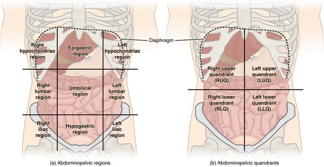 diese abbildung zeigt die regionen der peritonealhoehle