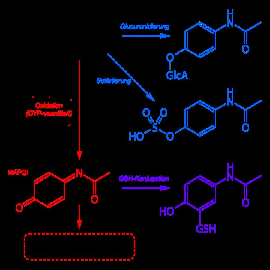 Paracetamol_metabolism